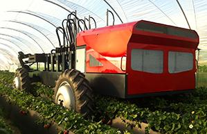 strawberry harvest machine